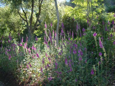 Trellisick Gardens